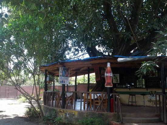 Alberos Tree House: Our Tree House Bar