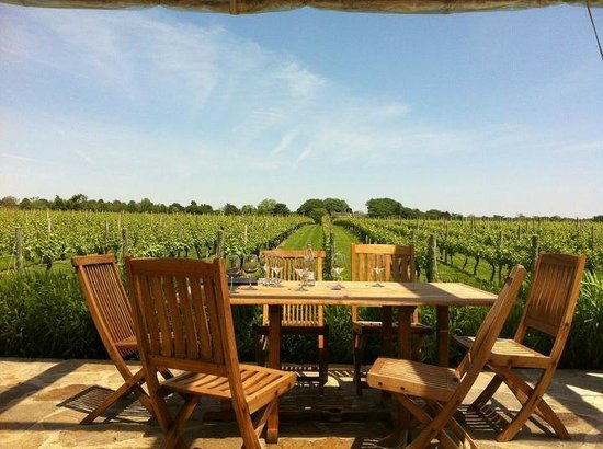 Sagaponack, NY: View of Vineyards at Wolffer Estate