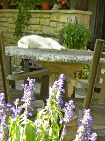 Le Moulin Neuf : One of the resident kitties enjoying a nap in the shade.