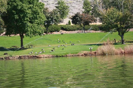 Cascade Campground: Canadian Geese in the Campground
