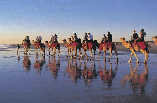 Riding camels in Broome, the Kimberley, Western Australia