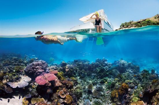 Australia: Snorkeling at the Great Barrier Reef, Queensland