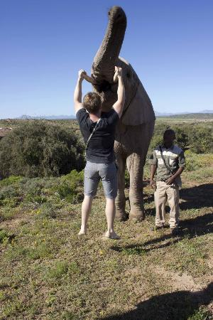 Buffelsdrift Game Lodge: Picking up the elephants