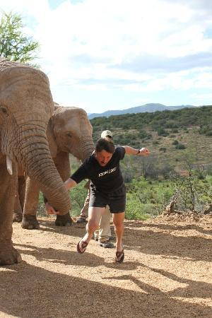 Buffelsdrift Game Lodge: Armwrestling with elephant