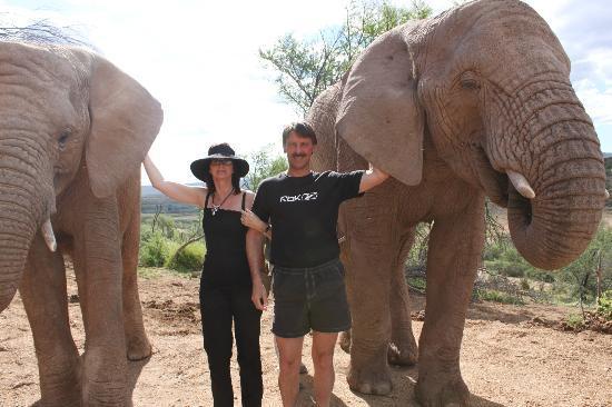 Buffelsdrift Game Lodge : Elephant ears