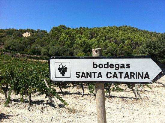 Bodegas Santa Catarina