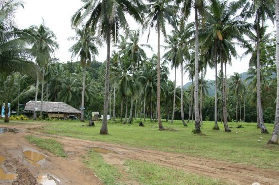 Daluyon Beach and Mountain Resort: COCONUT TREES