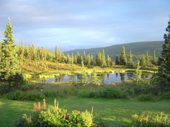 Camp Denali: Pond near the lodge