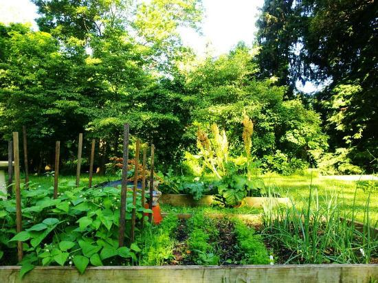 The Chaney Manor Bed and Breakfast Inn: The Chaney Manor B & B Organic Gardens