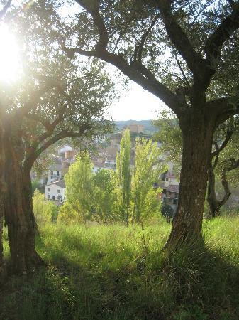 Casa Rural Bolilla: Ruguilla entre olivos