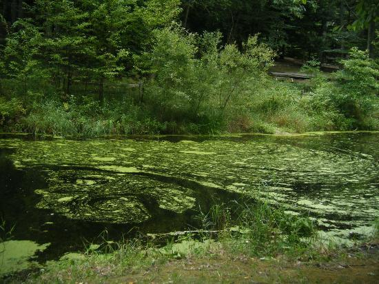 "Stony Haven Campground: The ""stocked"" pond"