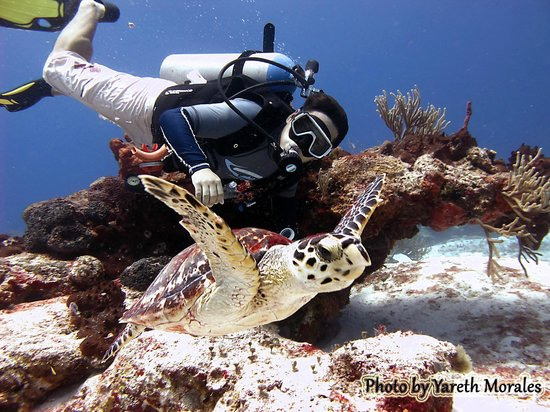 Always Diving & Water Sports: Sesión de Buceo