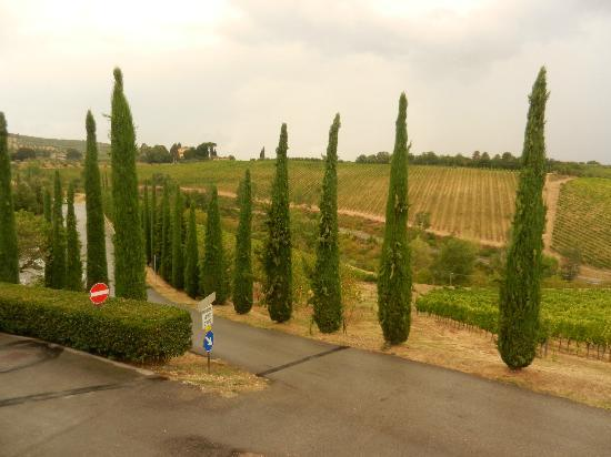 Tuscan Wine Tours with Angie: Wine Tour