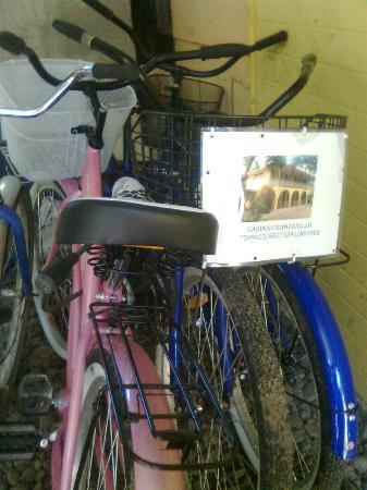 Cabinas Manzanillo: Alquilamos Bicicletas