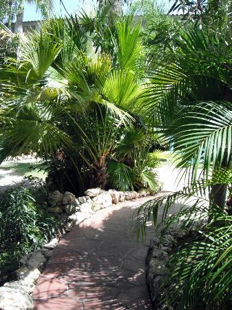Boardwalk Hotel Aruba: Path from the lobby to our Casita