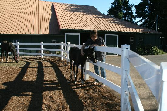 Wine Country Farm: We were greeted by an adorable, friendly Mare and foal.