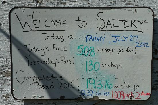 The fish count at Saltery Lake Lodge for the day (so far)