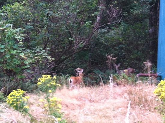 Ilwaco, Вашингтон: Two deer along trail to lighthouse