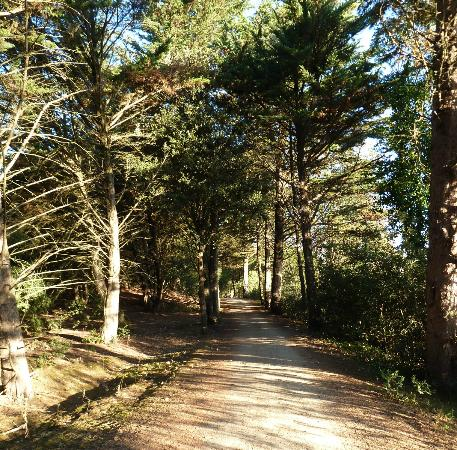 Camping La Forêt : Early morning walk at Camping la Foret