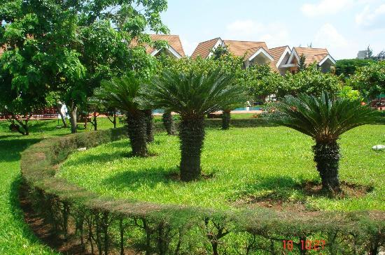 Son Thuy Resort : Живописные пальмочки