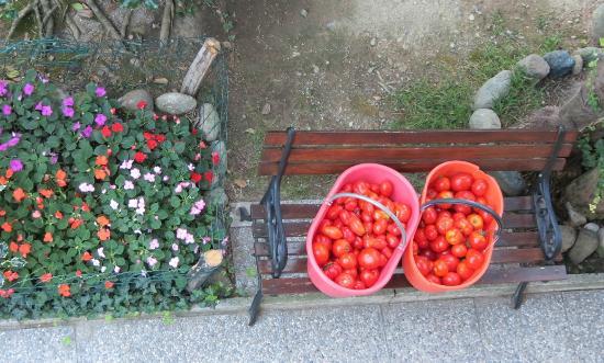 Bed & Breakfast La Casa al Mare: I Frutti meravigliosi della campagna
