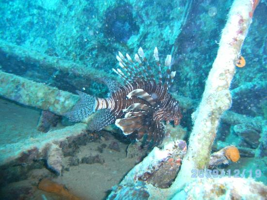 Diamond Red Sea Divers : Great wreck diving