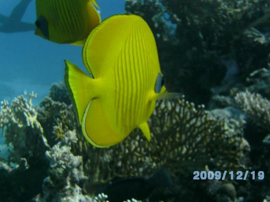 Diamond Red Sea Divers : Brilliant colors