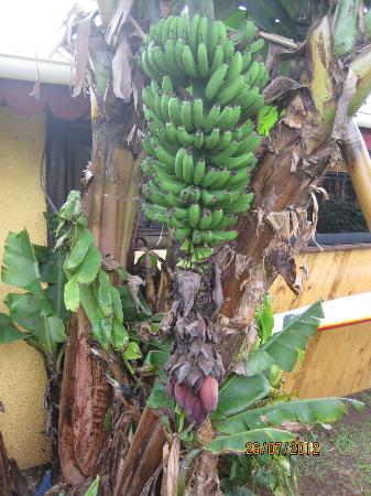 Cabanas Christophe: Bananas