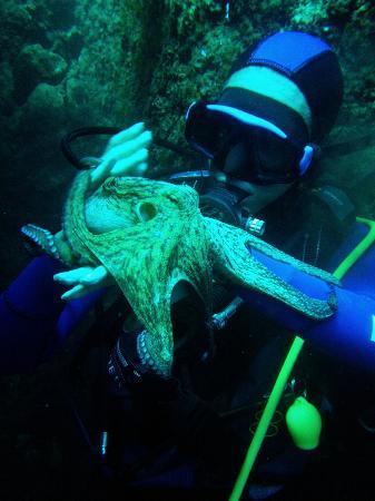 European Diving Institute - Centre de plongee en Crete: eurodiving