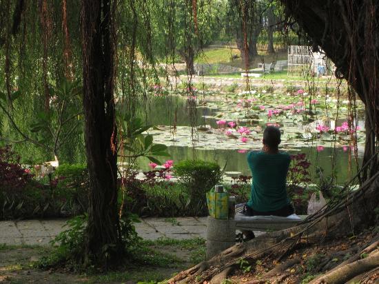 Tainan Park : 満開の蓮が浮かんだ池を前に、ゆっくり