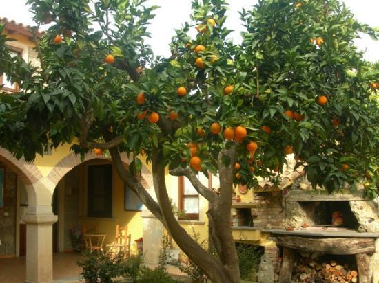 Casa Tipica S'antigu: giardino