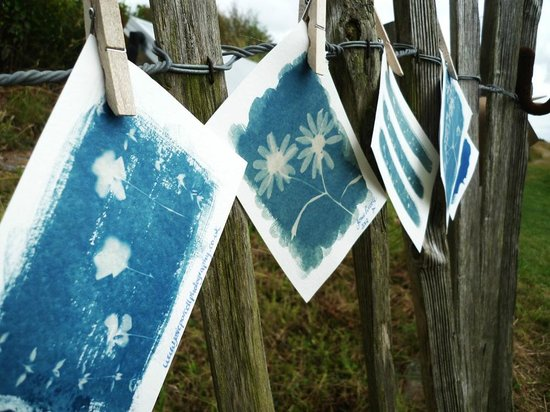 Aggie Arts: Cyanotype photography holidays, workshops and courses in St Agnes, Cornwall
