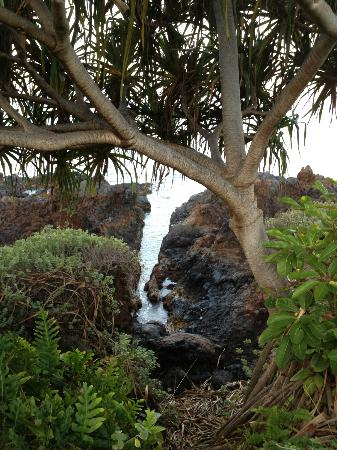 Four Seasons Resort Maui at Wailea: Walking along the path in front of resorts.
