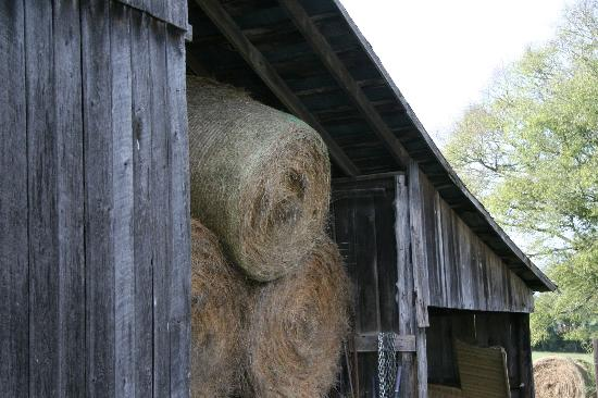 The Old Dr Cox Farm Bed & Breakfast: Hay in Barn
