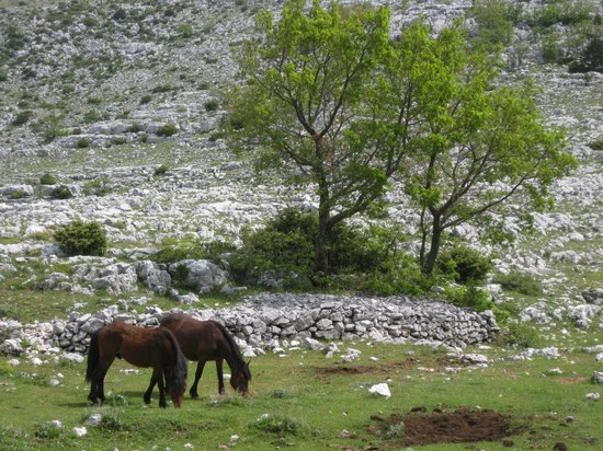 Makarska, Croacia: 8 of 13 Loose domesticated horses near road