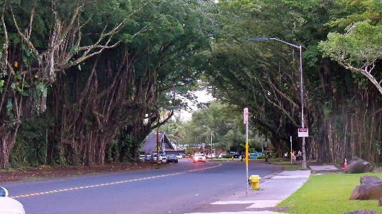 Hilo Seaside Hotel: Street adjacent to hotel, Banyan Drive
