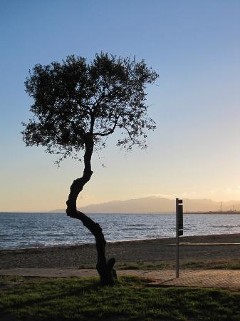 Port Eugeni: Tree