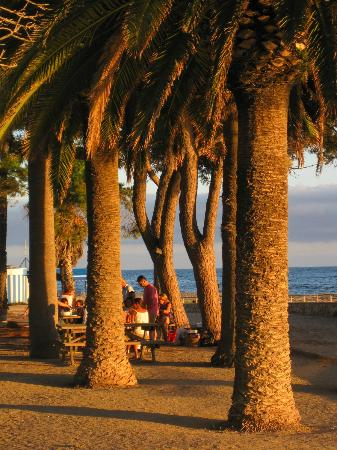 Port Eugeni : Beach with trees