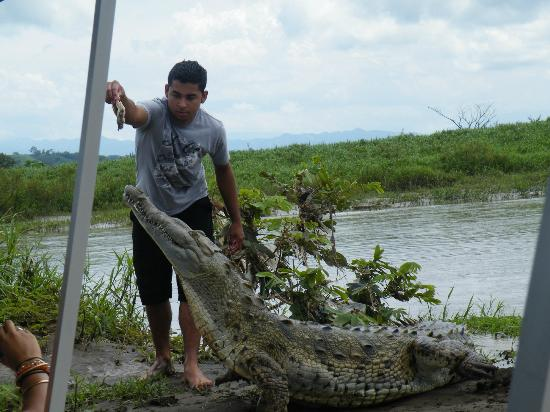 Jungle Crocodile Safari: Dare devil