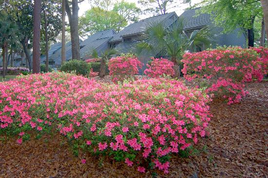 Ocean Cove Club at Palmetto Dunes: Flowers