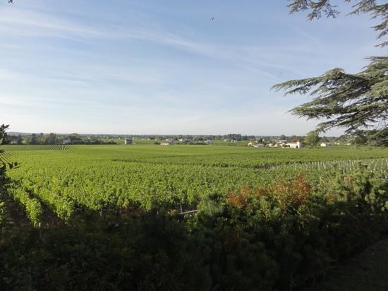 Le Relais de Franc Mayne: the backyard!