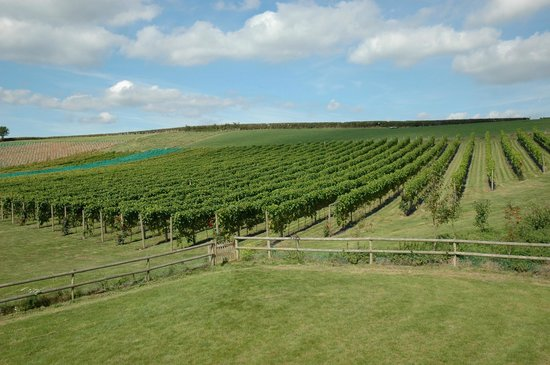 Topsham, UK: Pebblebed Ebford Vineyard
