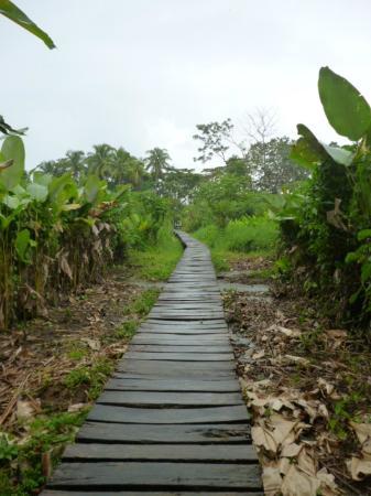 Playa Nicuesa Rainforest Lodge: Laguna Deck