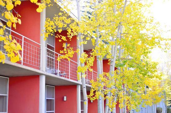 Aspen Meadows Resort : Exterior of the guest buildings