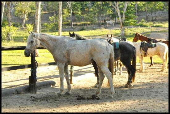 Billabong Horseback Adventures: Good strong, healthy horses, who were very happy!