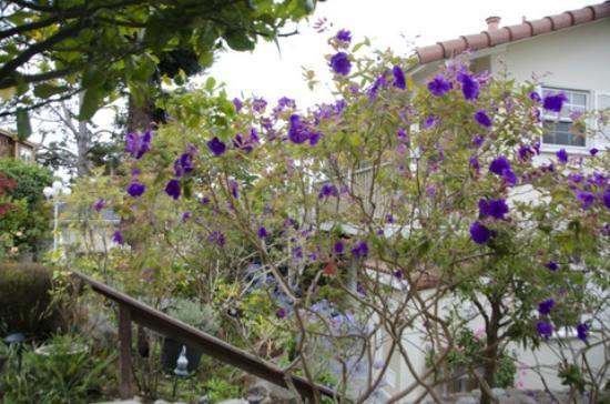 Vendange Carmel Inn & Suites: Garden