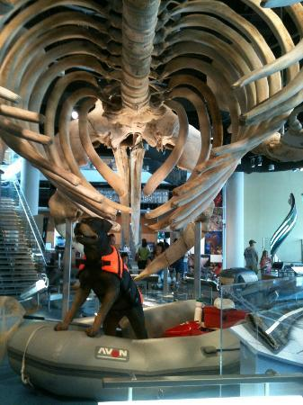 North Carolina Museum of Natural Sciences: Whale Skeleton