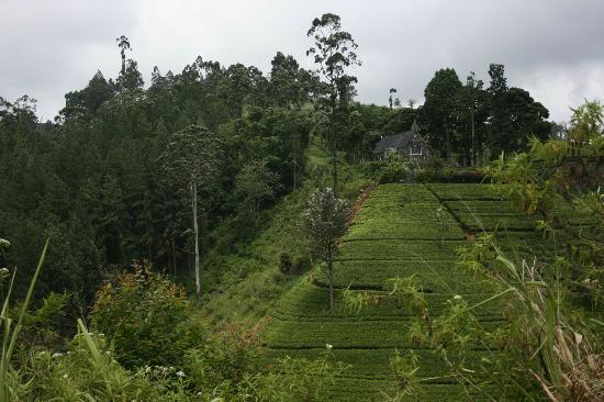 Ceylon Tea Trails - Relais & Chateaux: Castlereagh