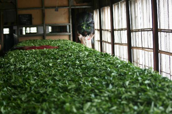 Ceylon Tea Trails: Inside tea factory