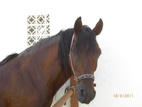 Djerba Island, Tunisia: Eines der Pferde auf der Ranch